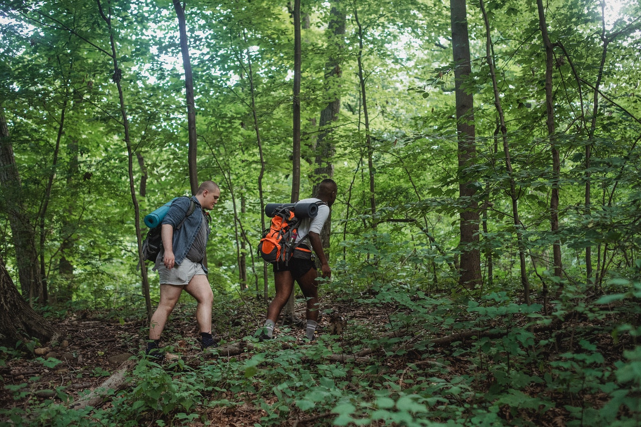 To personer går igennem skov